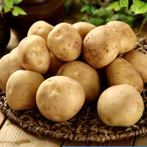 감자 19년 햇 감자 5kg(중)